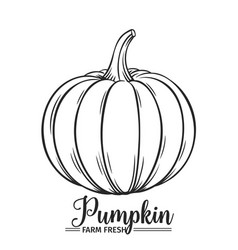 hand drawn pumpkin icon vector image vector image