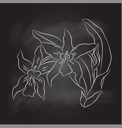 sg170104-green bahand drawing of orchid on black vector image