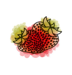 Watercolor drawing of pair strawberries fruits vector
