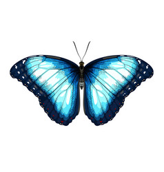 single blue butterfly morpho on a white background vector image