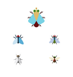 Flat icon buzz set of fly bluebottle housefly vector