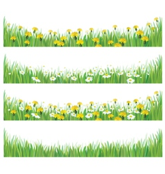grass flowers isolated vector image
