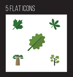 flat icon natural set of baobab maple alder and vector image