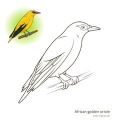 African golden oriole bird coloring book vector