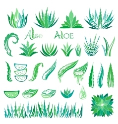 Aloe vera design elements icons collection vector