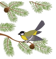 Bird titmouse on pine branch vector