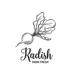 Hand drawn radish icon vector