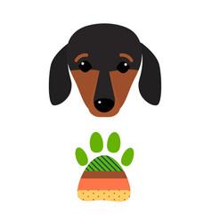 Little dachshund puppy head purebred mammal sweet vector