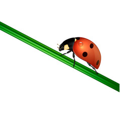 background with realistic ladybug insect on vector image vector image