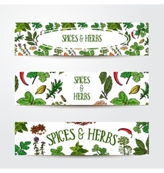 Set of hand drawn banner templates with spices and vector