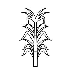 Sugar cane isolated icon vector