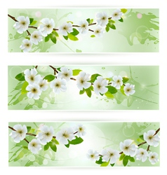 Three nature banners with blossoming tree branches vector image