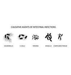 causative agents of acute intestinal vector image vector image
