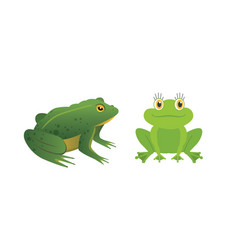 exotic amphibian set frogs in different styles vector image