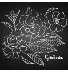 Graphic gardenia set vector
