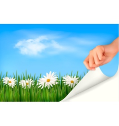 Nature background with green grass daisies and vector
