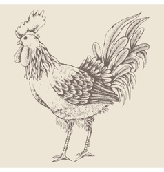 Profile of cock sketch vector
