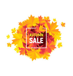 Autumn sale flyer with maple leaves on white vector