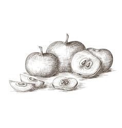 Hand drawn apple vector