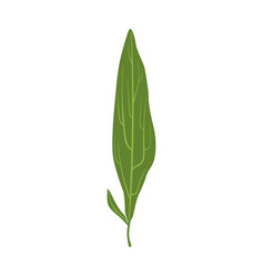 willow tree green leaf vector image vector image
