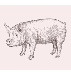 Hand drawn pig vector image vector image