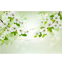 Nature background with white blossoming branches vector