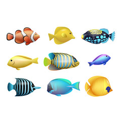 set of tropical fishes vector image