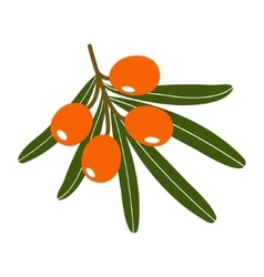 Branch of sea-buckthorn berries vector