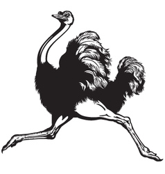 Ostrich black white vector