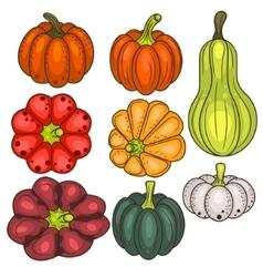 Set of pumpkin vegetable clip art vector