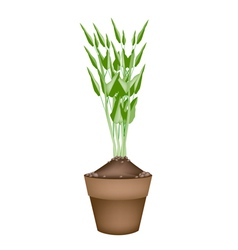 Fresh water spinach in ceramic flower pots vector