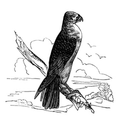 Milan Falco vintage engraving vector image vector image