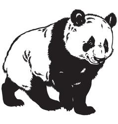 Panda black white vector