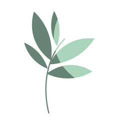 plants with leaves icon image vector image