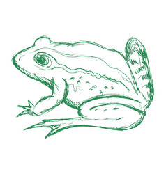 toad side view vector image