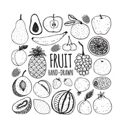 set of fruit in doodle style vector image