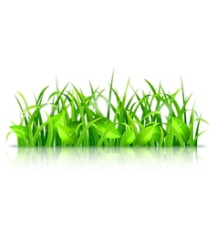 Green grass and leaves vector