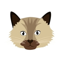 Colorful cat front view graphic vector