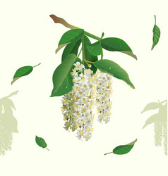 White flowers of bird cherry tree seamless vector