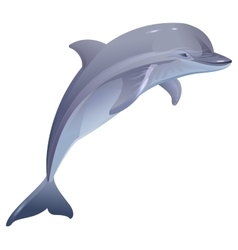 Marine mammal dolphin vector