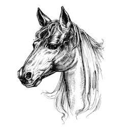 Horse head drawing vector