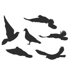 Set bird pigeon flies black silhouettes vector