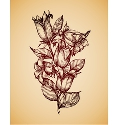 Vintage flower hand drawn retro sketch campanula vector