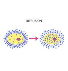 Diffusion across cell membranes vector