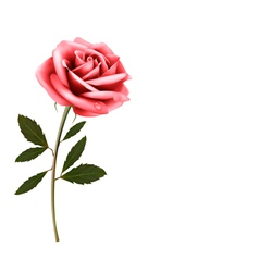 Flower background with a pink rose vector image vector image