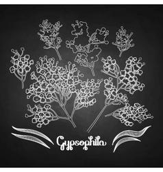Graphic gypsophila set vector
