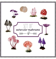 Set of watercolor mushrooms vector image