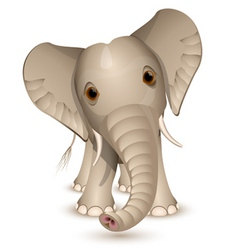 little elephant vector image