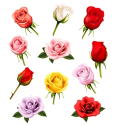 Set of different roses vector
