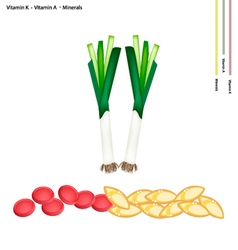 Fresh leek with vitamin k a and minerals vector